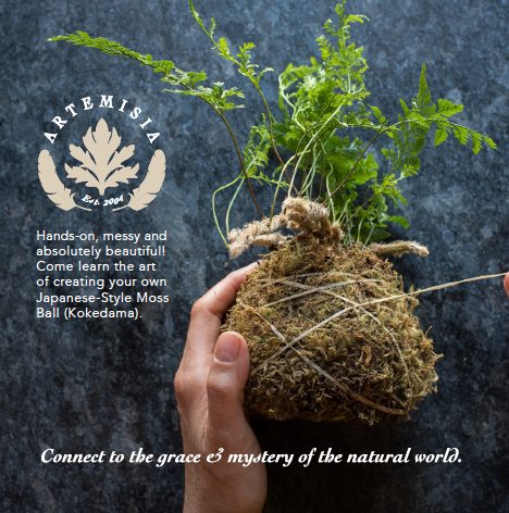 Learn the art of creating a Kokedama Moss Ball: Hands on, messy and absolutely beautiful! $45.   Check calendar  for classes &  Class  Gift Certificates