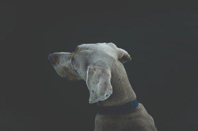 dog runner-santa-monica
