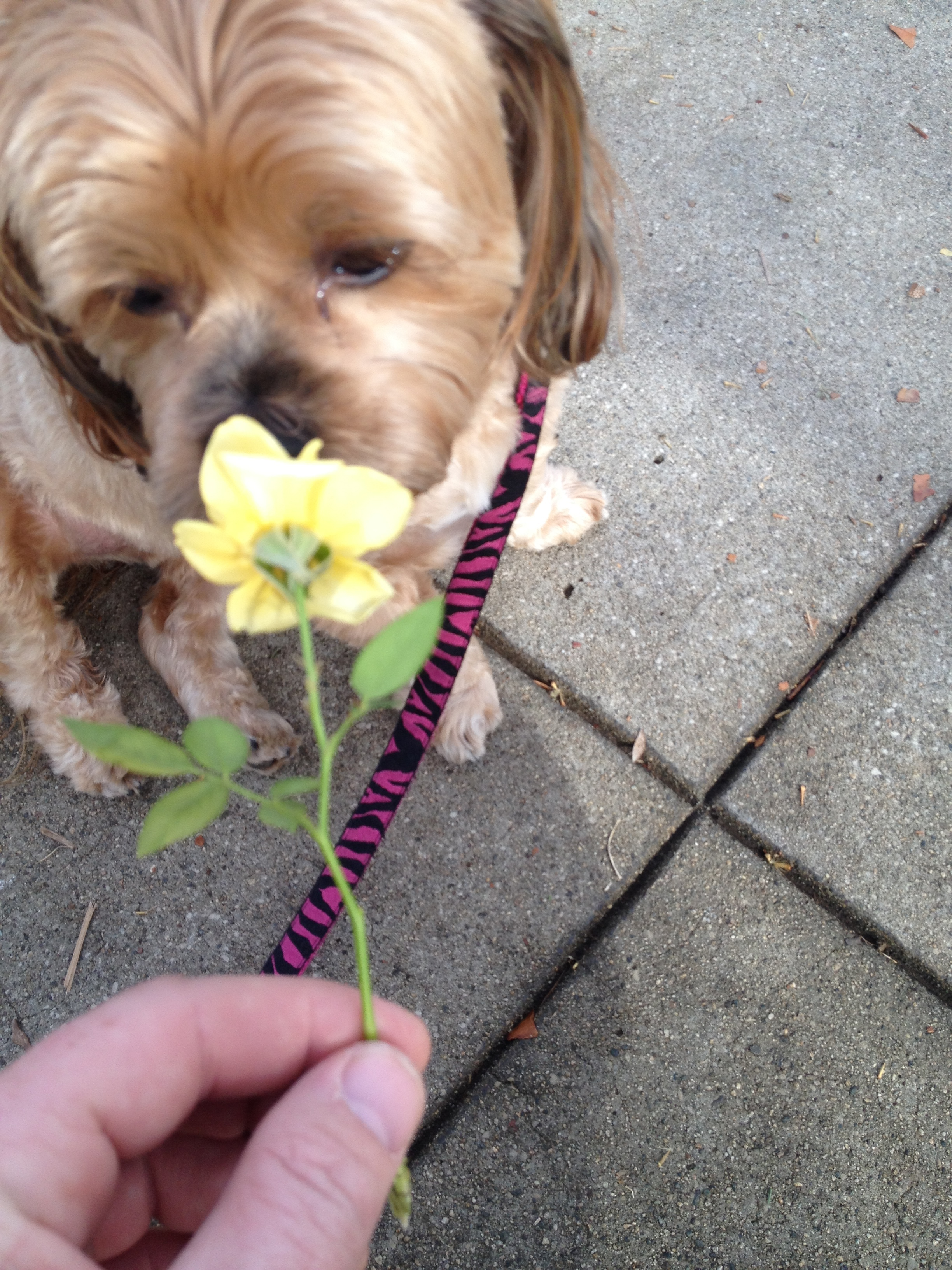Coco Flower Pup
