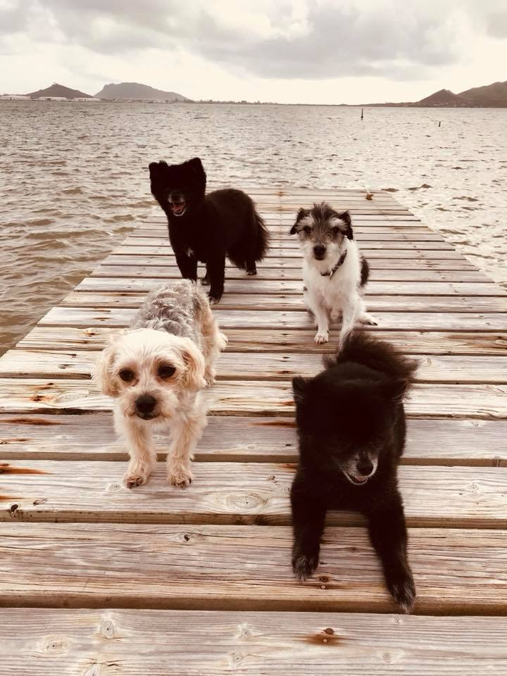 pups on dock.jpg