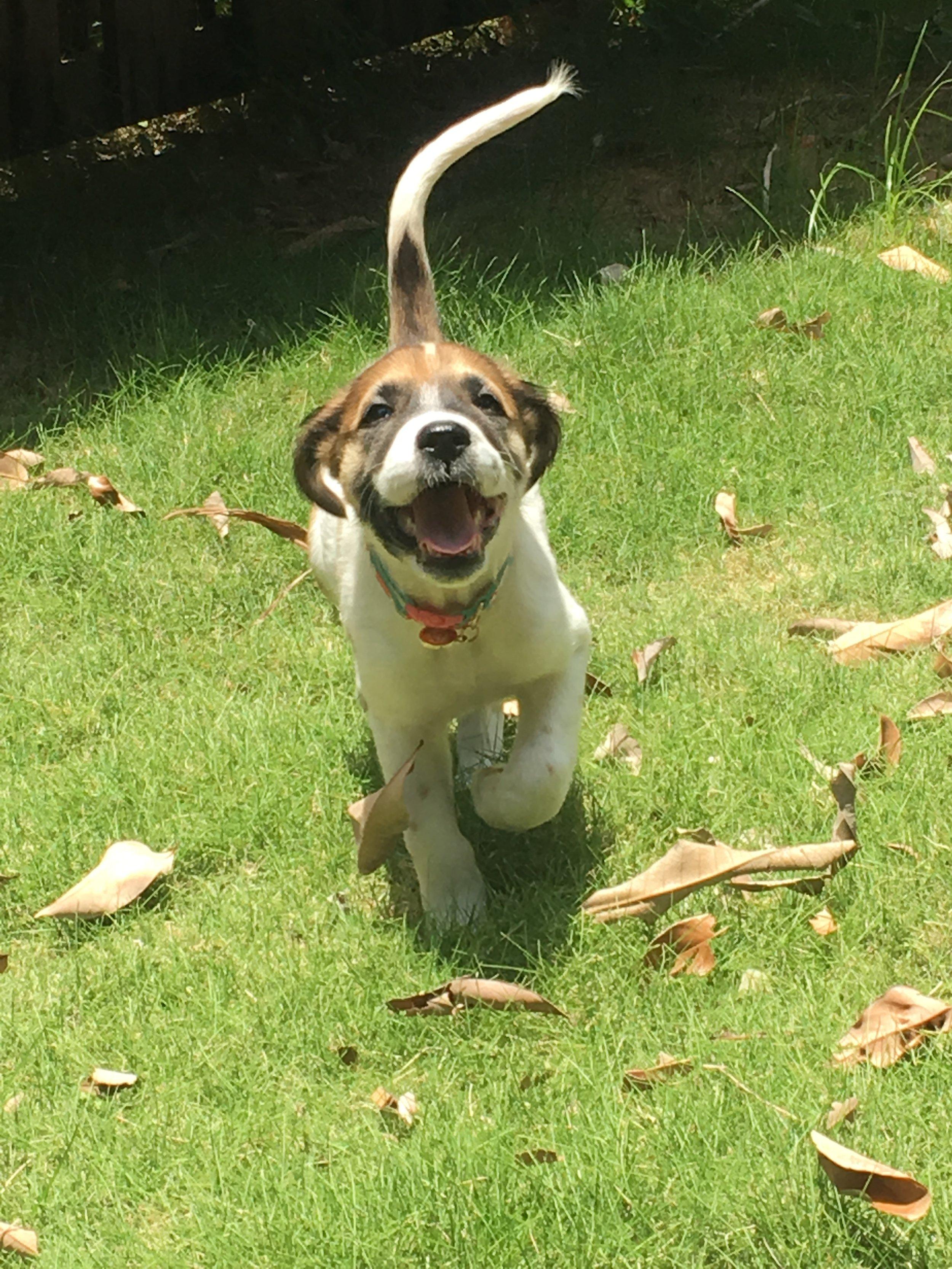 flossy pup.JPG