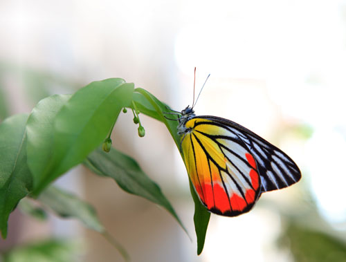 monarch-butterfly_photo_1.jpg
