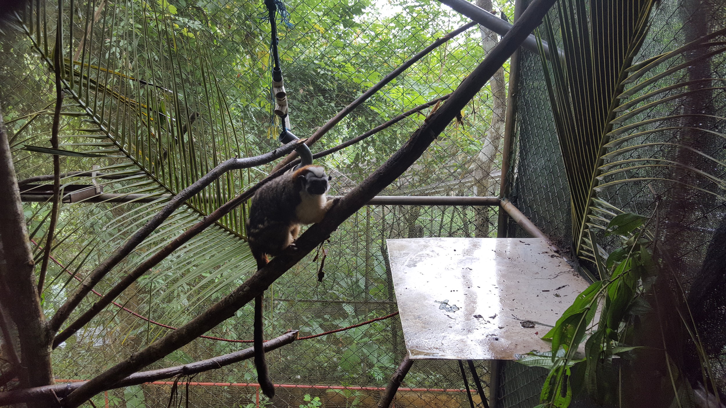 Marmoset enclosure