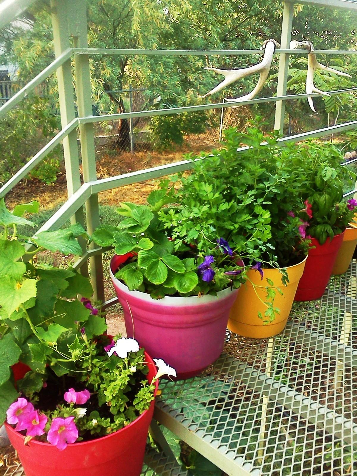 garden July 2015 002.jpg