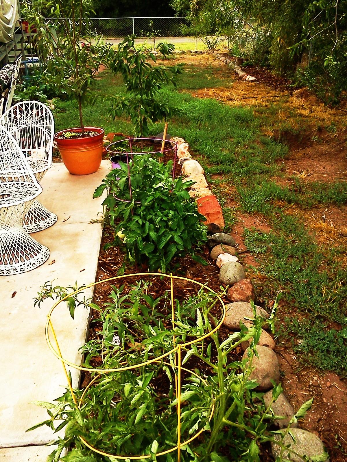 Garden July 2015 026.jpg