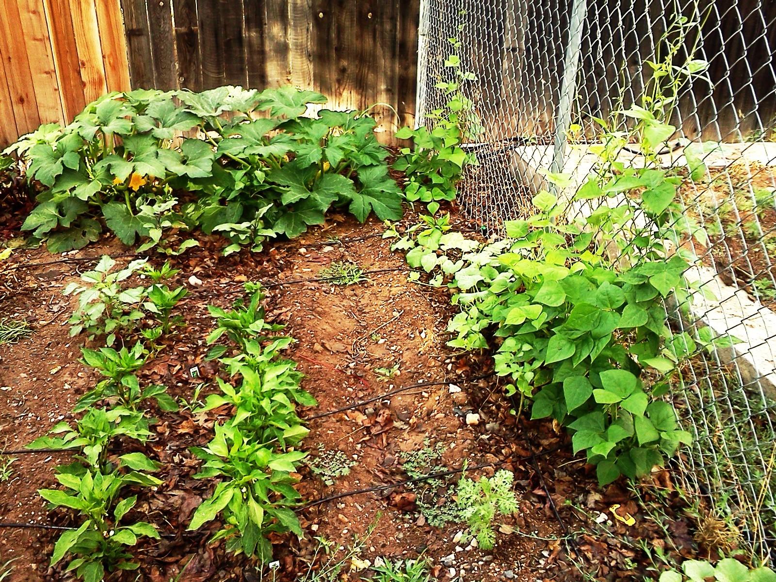 Garden July 2015 028.jpg