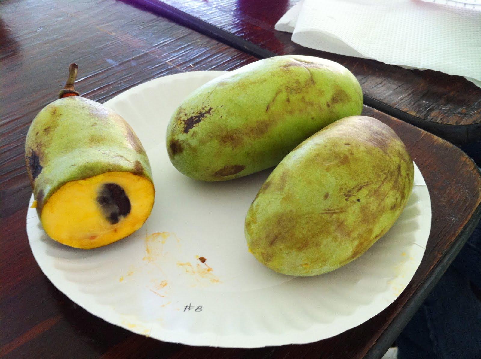 Pawpaw, North America's largest wild edible fruit.
