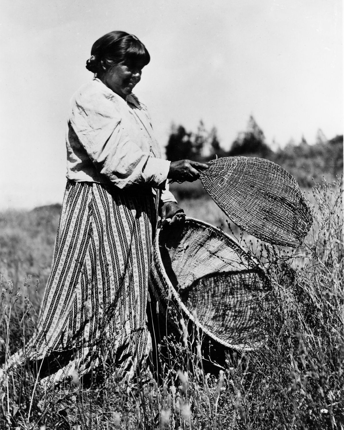 This Maidu woman is gathering wildflower seeds in the photo, however grass seeds would have been gathered the same way.
