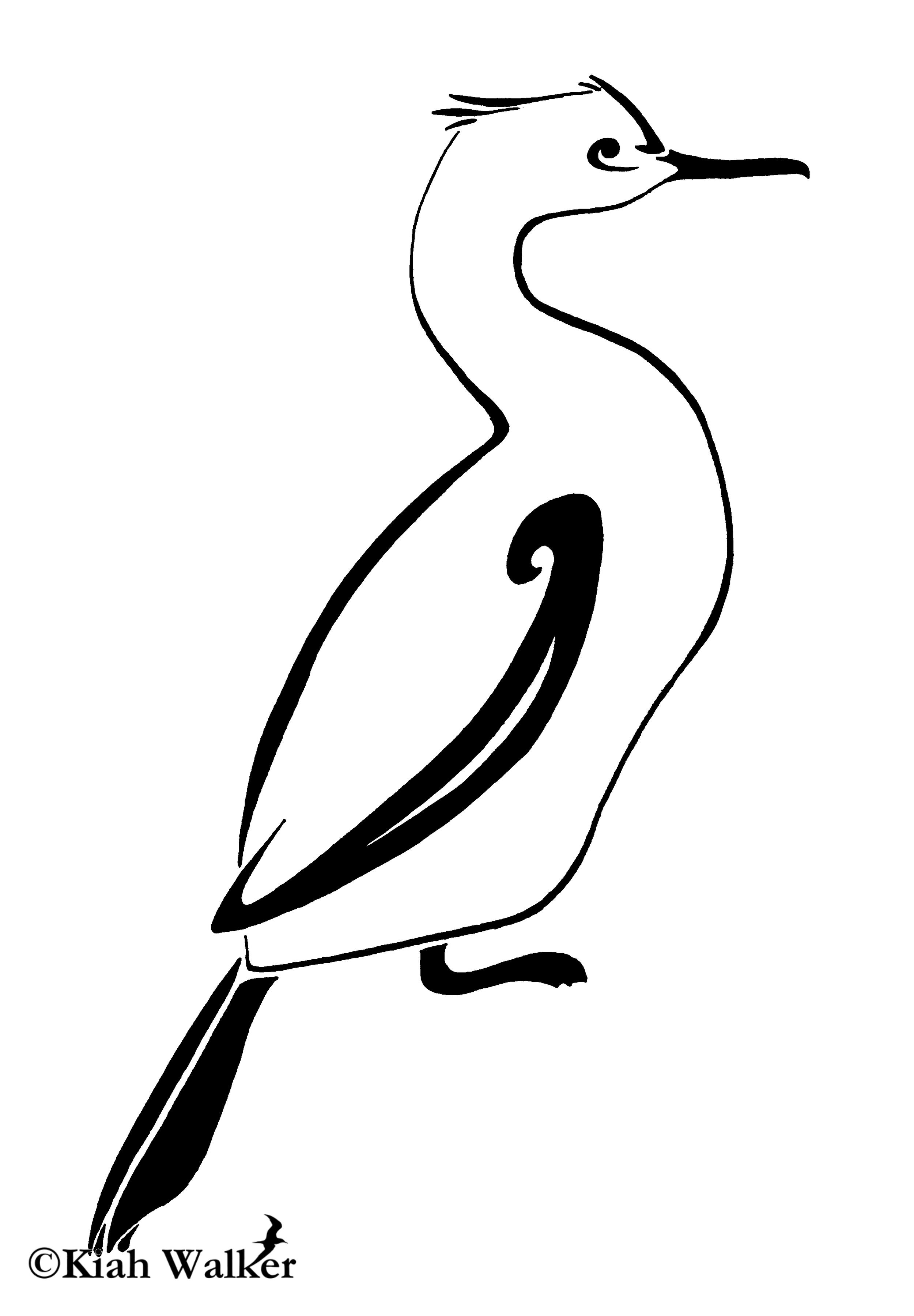 Pelagic cormorant ( Phalacrocorax pelagicus )