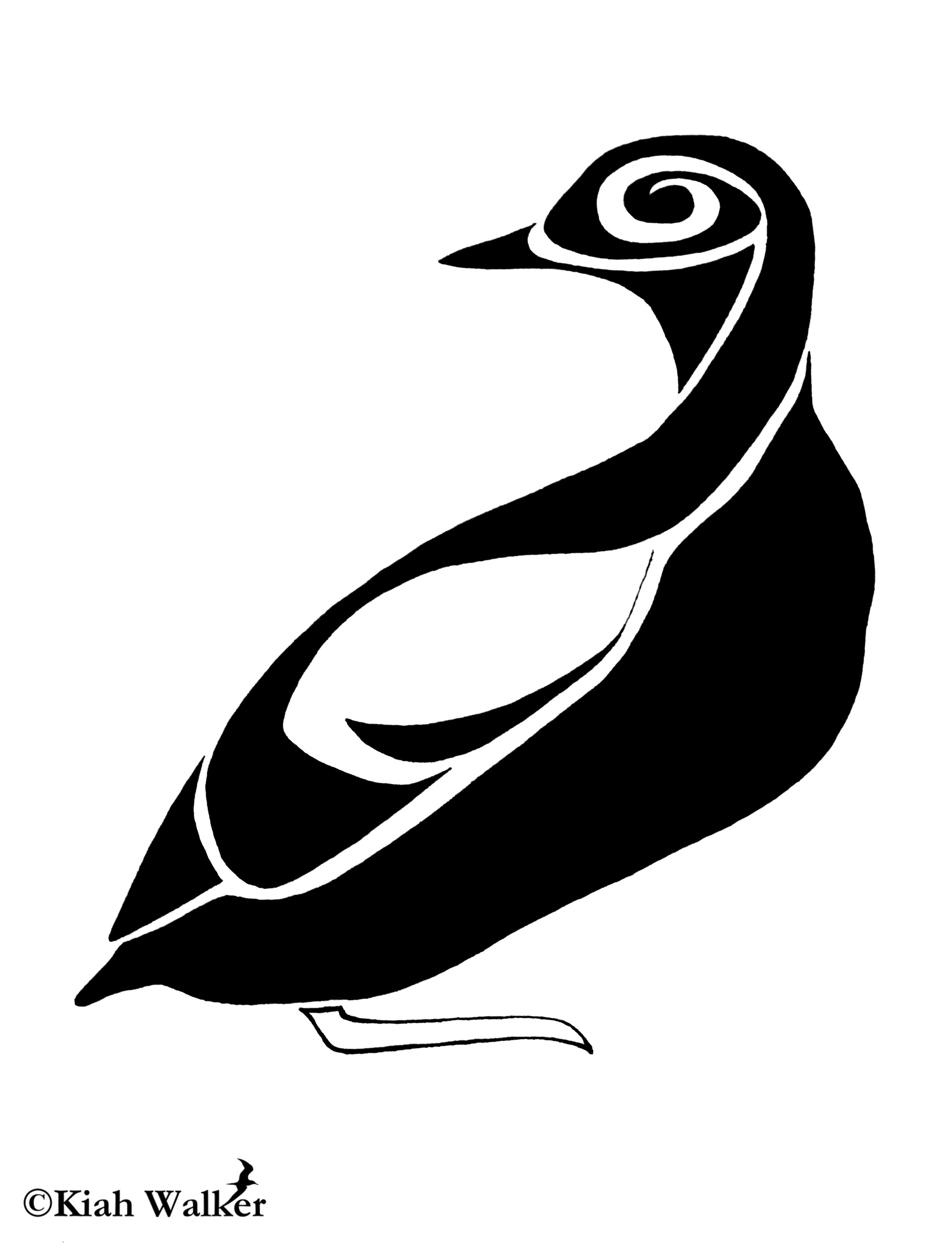 Pigeon guillemot ( Cepphus columba )