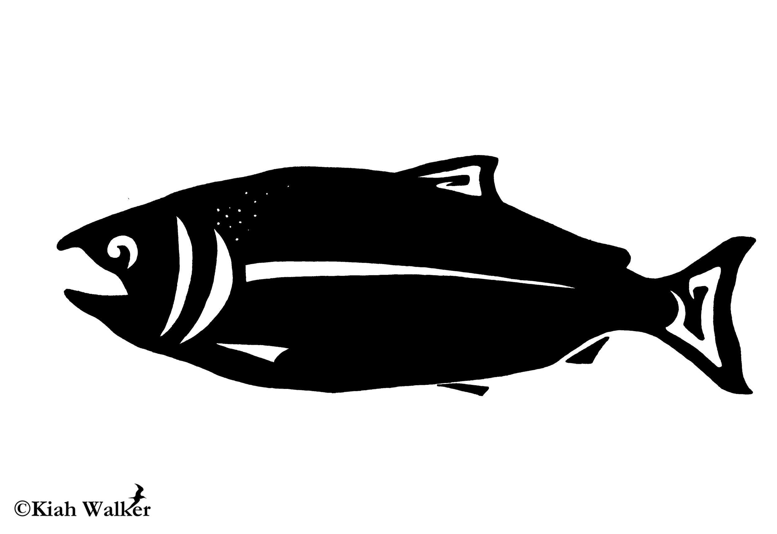 Coho salmon ( Oncorhynchus kisutch )
