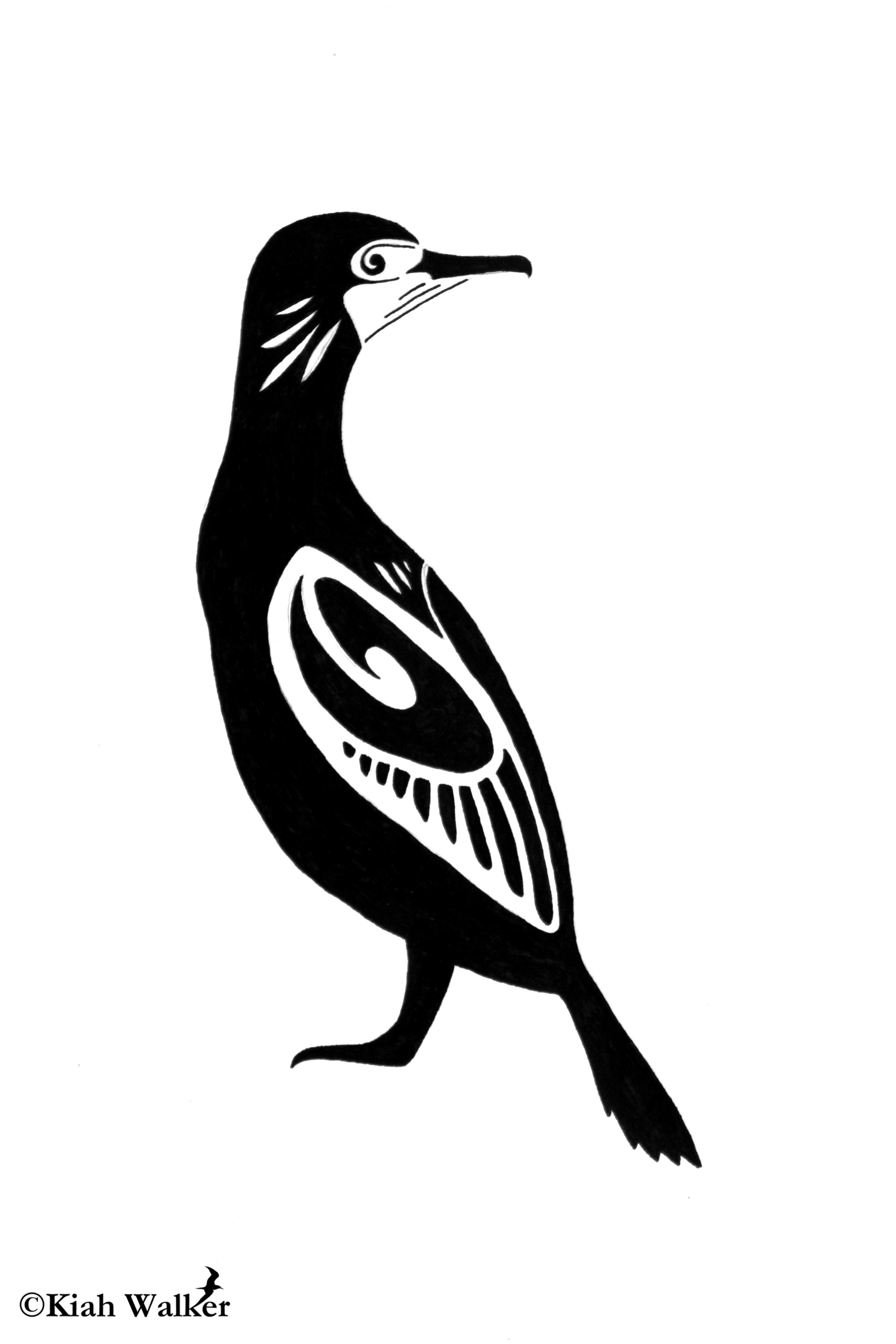Brandt's cormorant ( Phalacrocorax penicillatus )