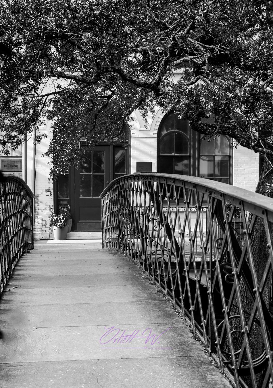 Savannah in Black & White I