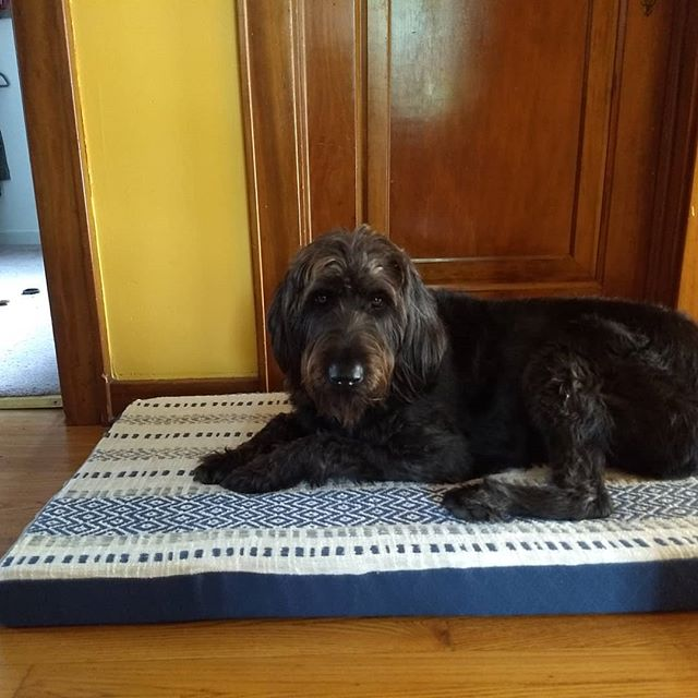 A less than productive morning for work meant a productive morning making a new dog bed for Finn.  I used leftover woven fabric for the top, upholstery fabric for the bottom, leftover foam from a friend and a new zipper.  I think Finn likes it. #finnsadventure #homemadelife #handmadedogbed