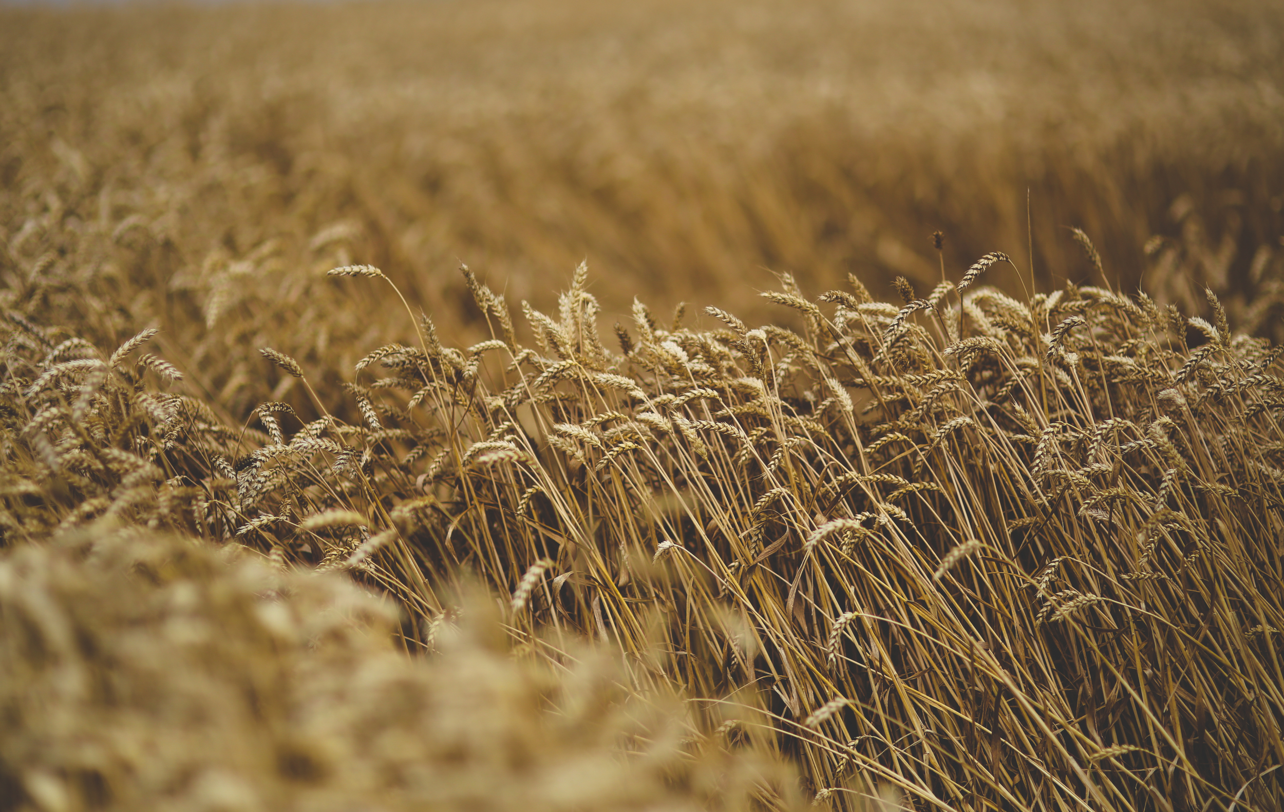 nature-grain-moving-cereal.jpg