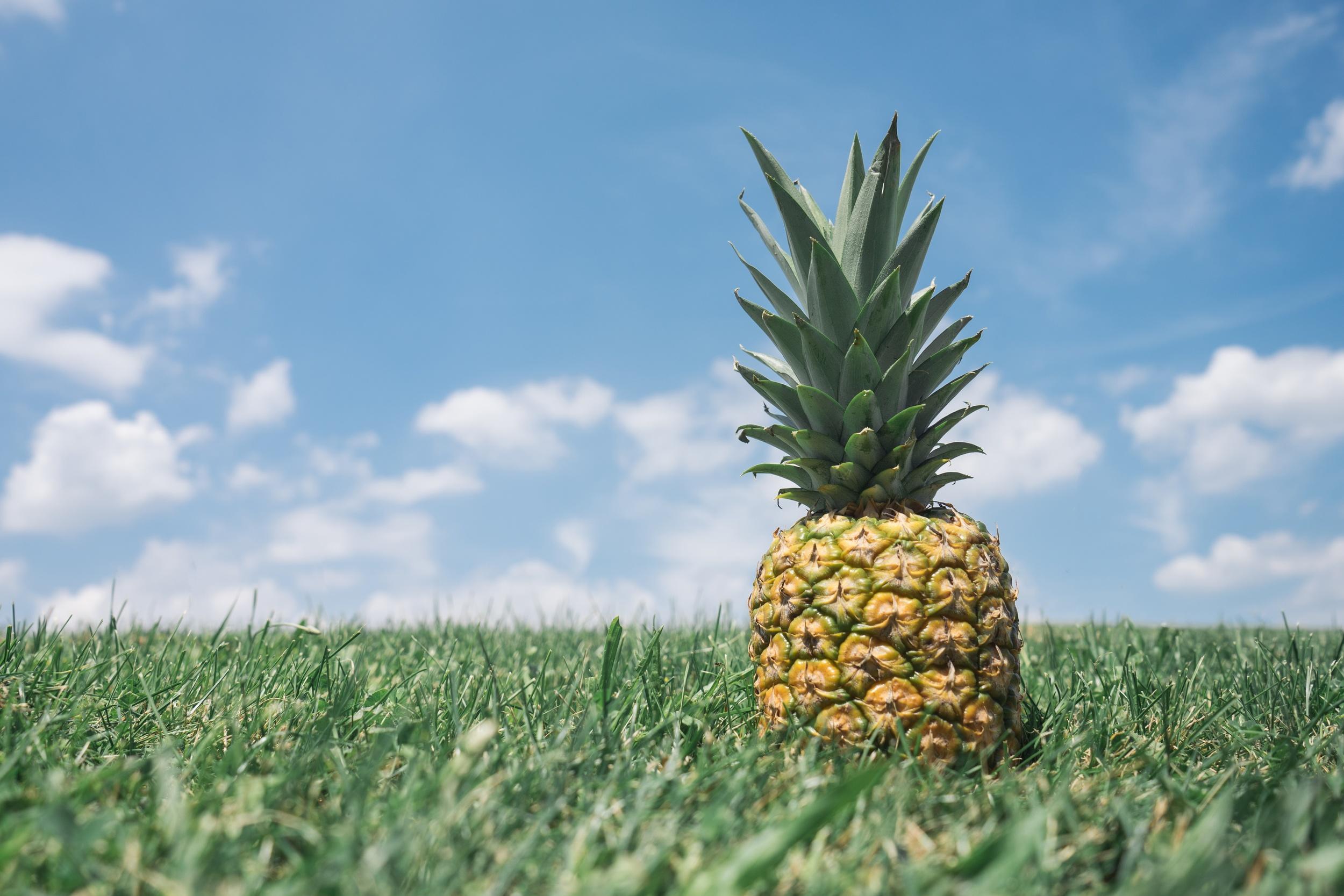 Free High Resolution Pineapple