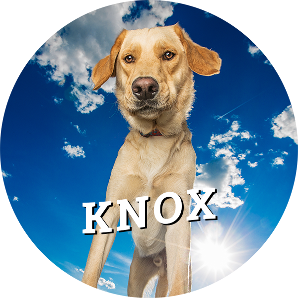 home-knox.png
