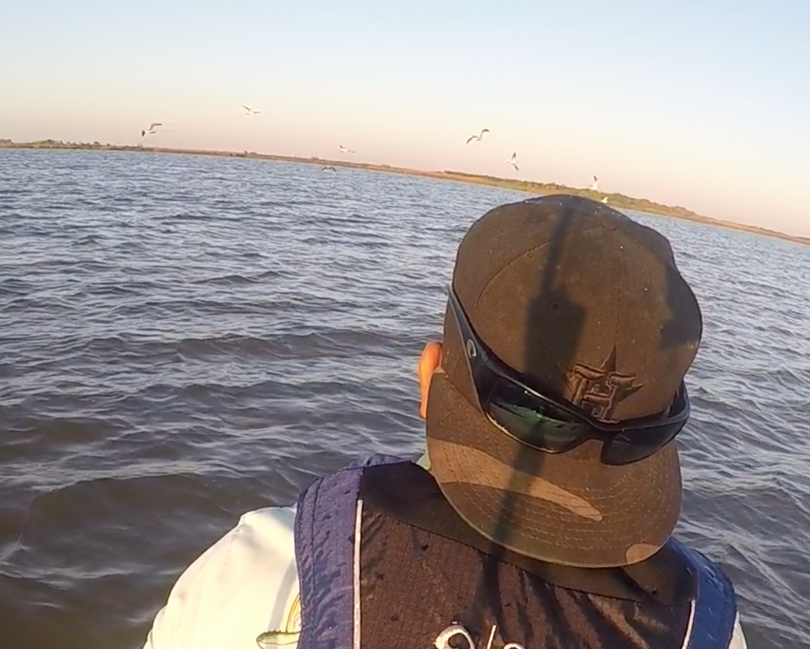 Birds working a redfish school off in the distance