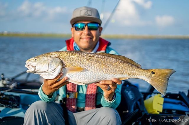 Here's my stud. This healthy slot weighed in close to 8 lbs. #hobiefishing #kayakfishing #fishing #texas #galveston #reelyakkers #redfish #trout #flounder #hobiefishingteam #sonya7iii #50mmf18 #photography #photooftheday