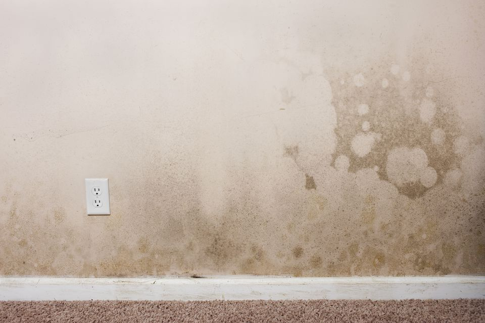 What Kind of Mold is This? - Where is that moldy smell coming from?