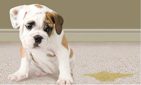 We love our pets, but unfortunately they can leave behind unwanted odors!