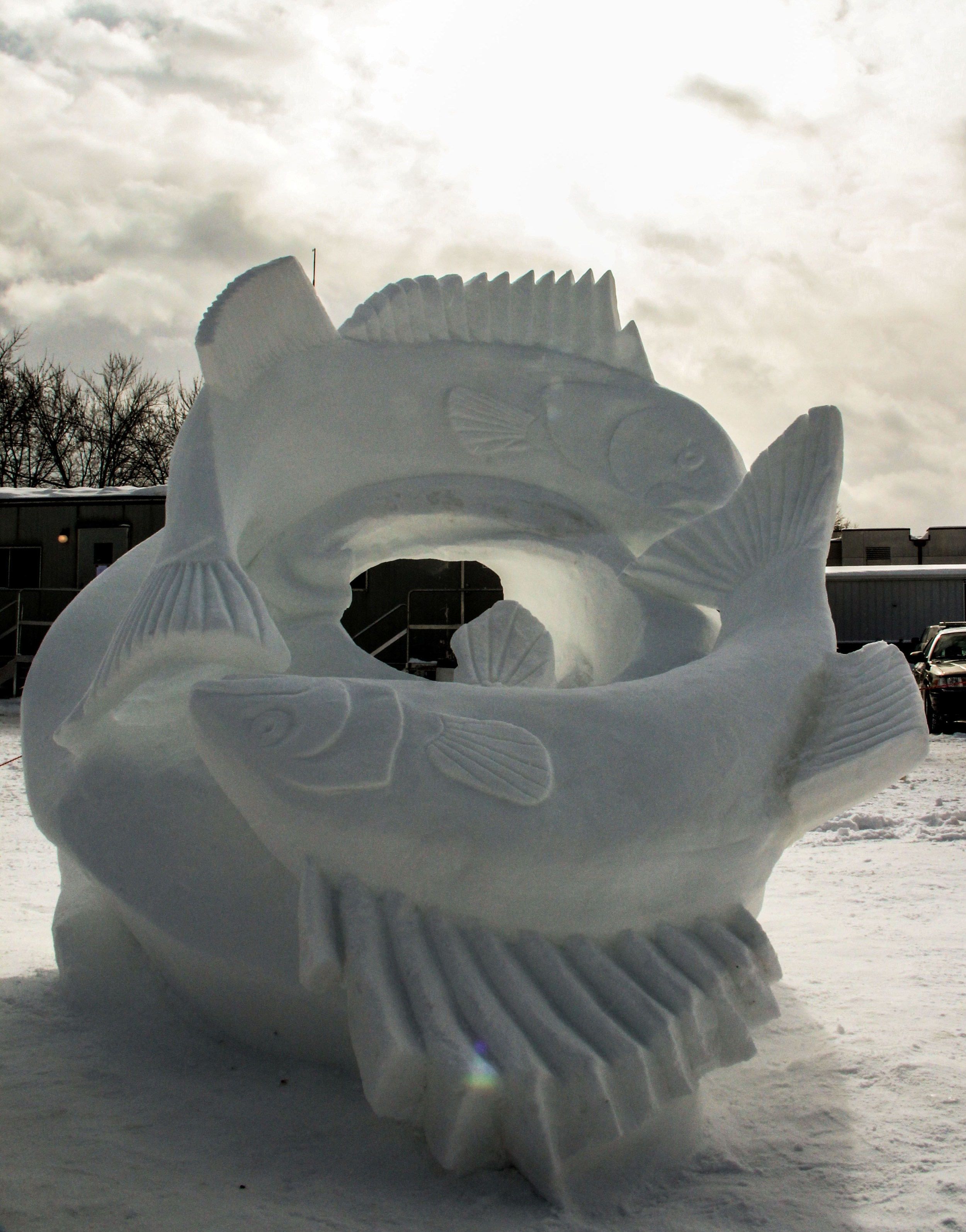 Mobius Fish   8'x8'x8'  Snow Sculpture  St. Paul Winter Carnival   2014