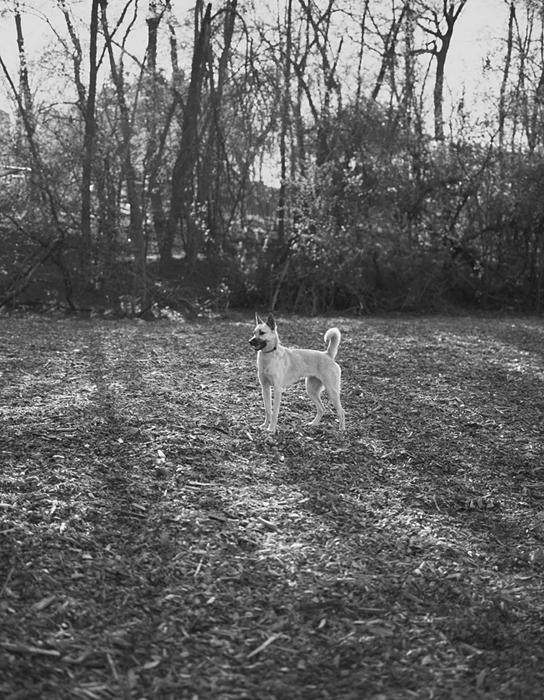 Dog060_Edit.jpg