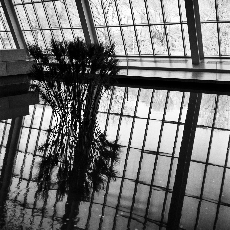 152-new-york-black-and-white-film-rolleiflex-28-e.jpg
