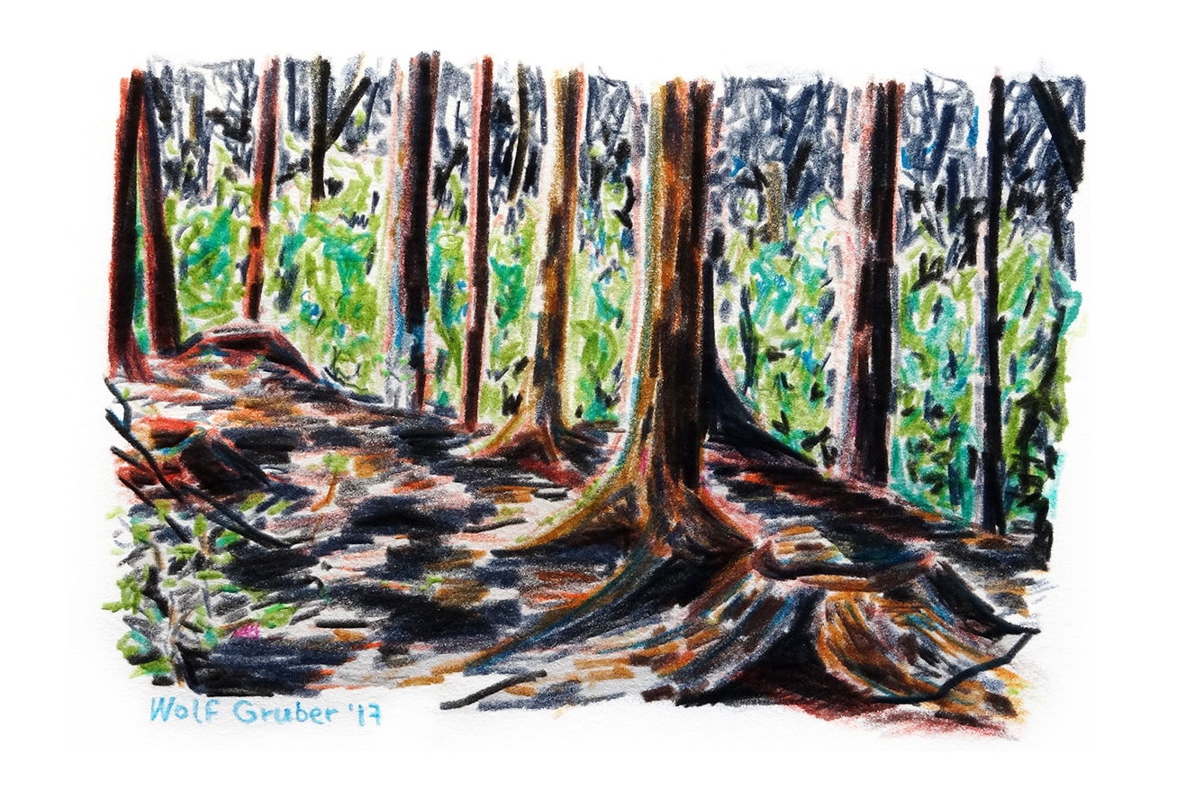 Wald1-17-150.jpg