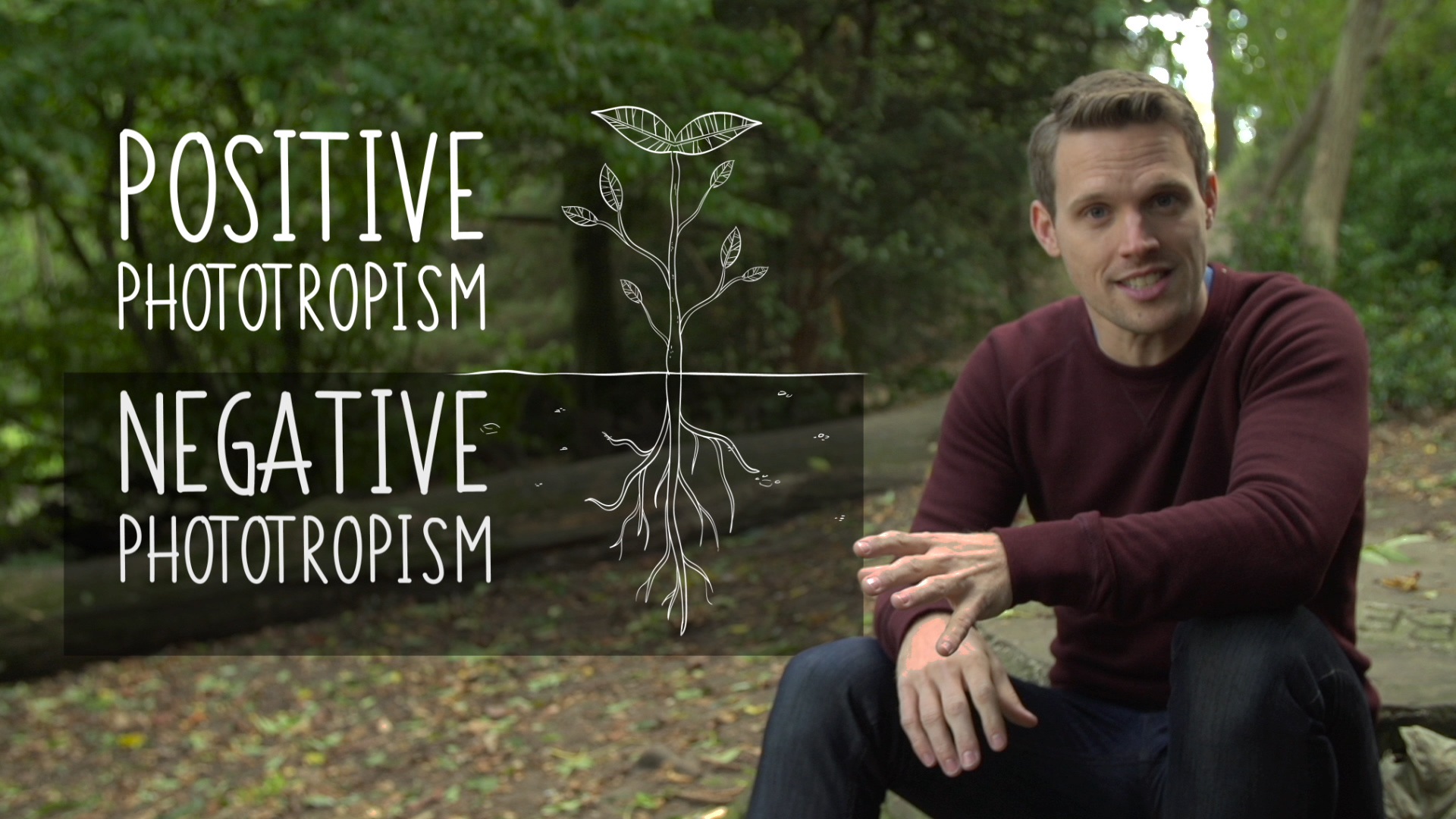 GCSE Biology - 'Plant Hormones'