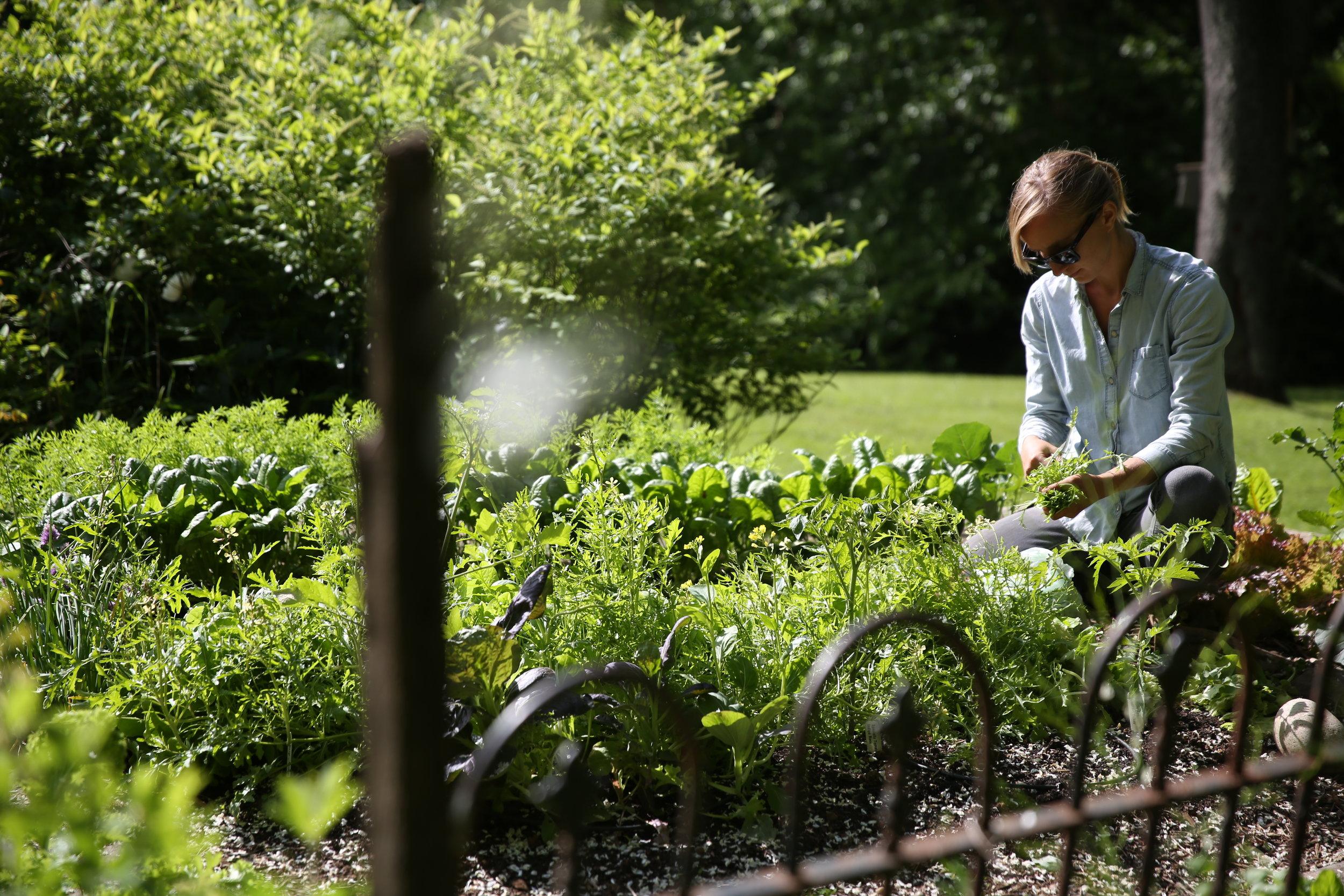 In-Ground Garden - McLean, VA