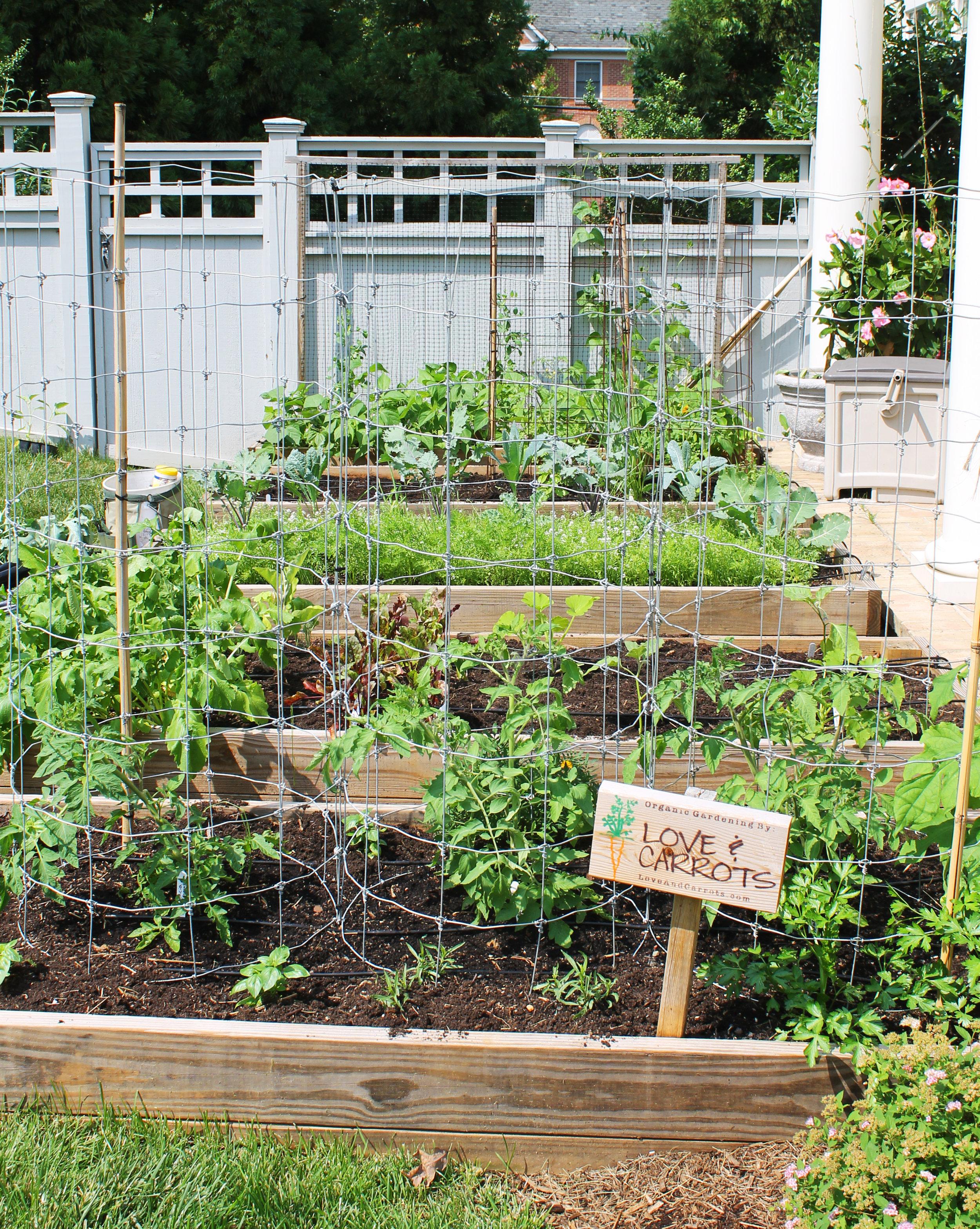 Raised Bed Garden - Arlington, VA