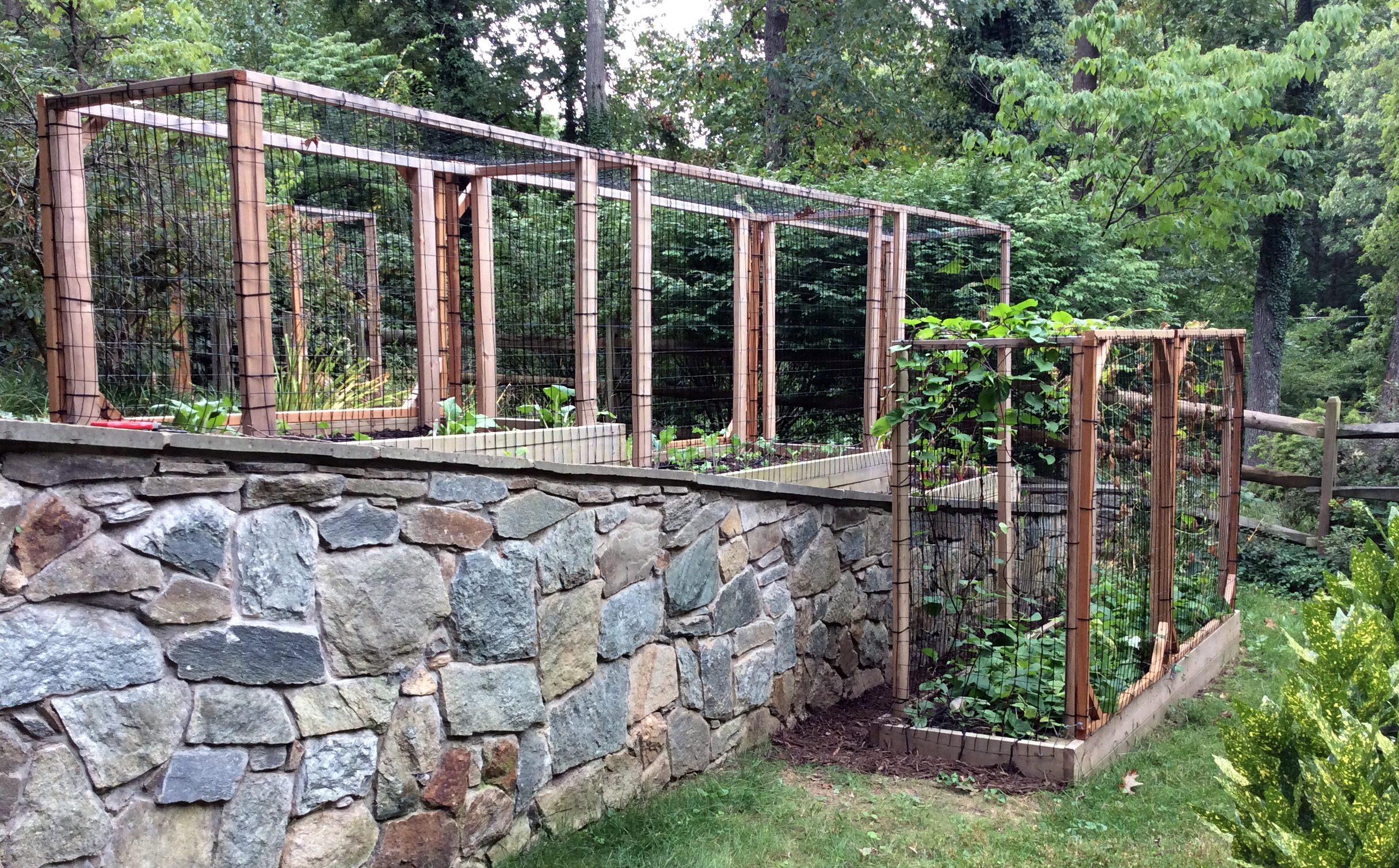 """Raised Bed Garden with """"Critter Cages"""""""