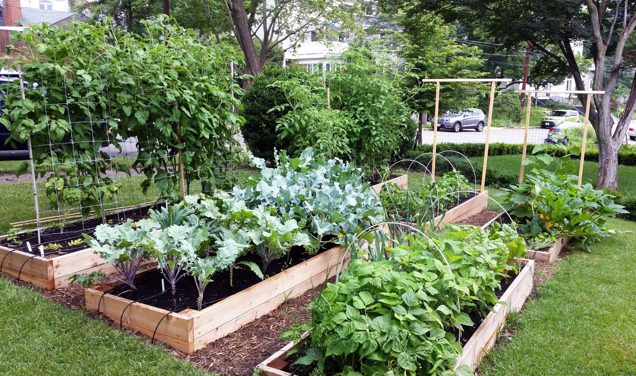 Raised Bed Gardens, Trellis, Sloped
