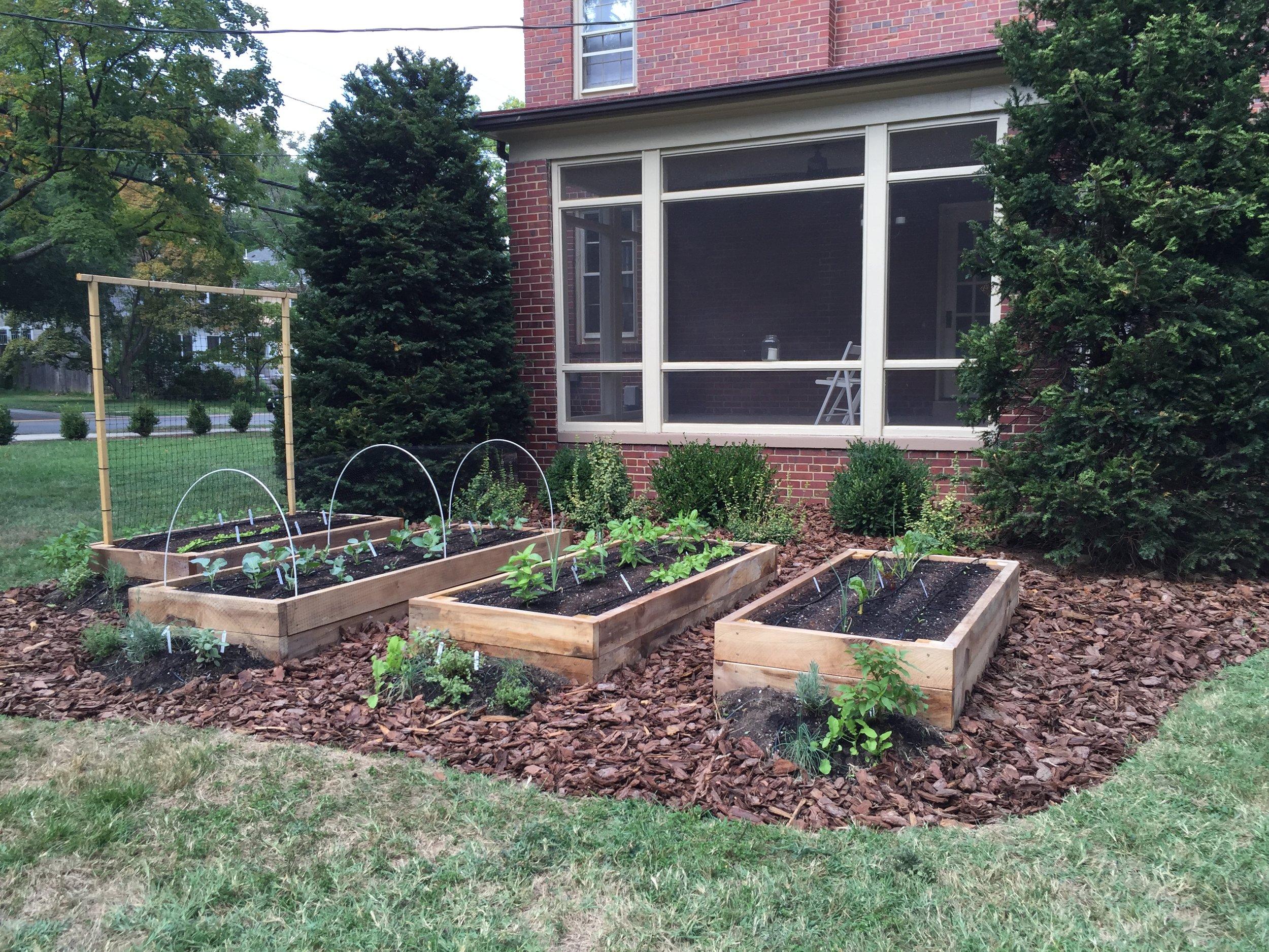 Raised Bed Garden, Trellis, Mulching