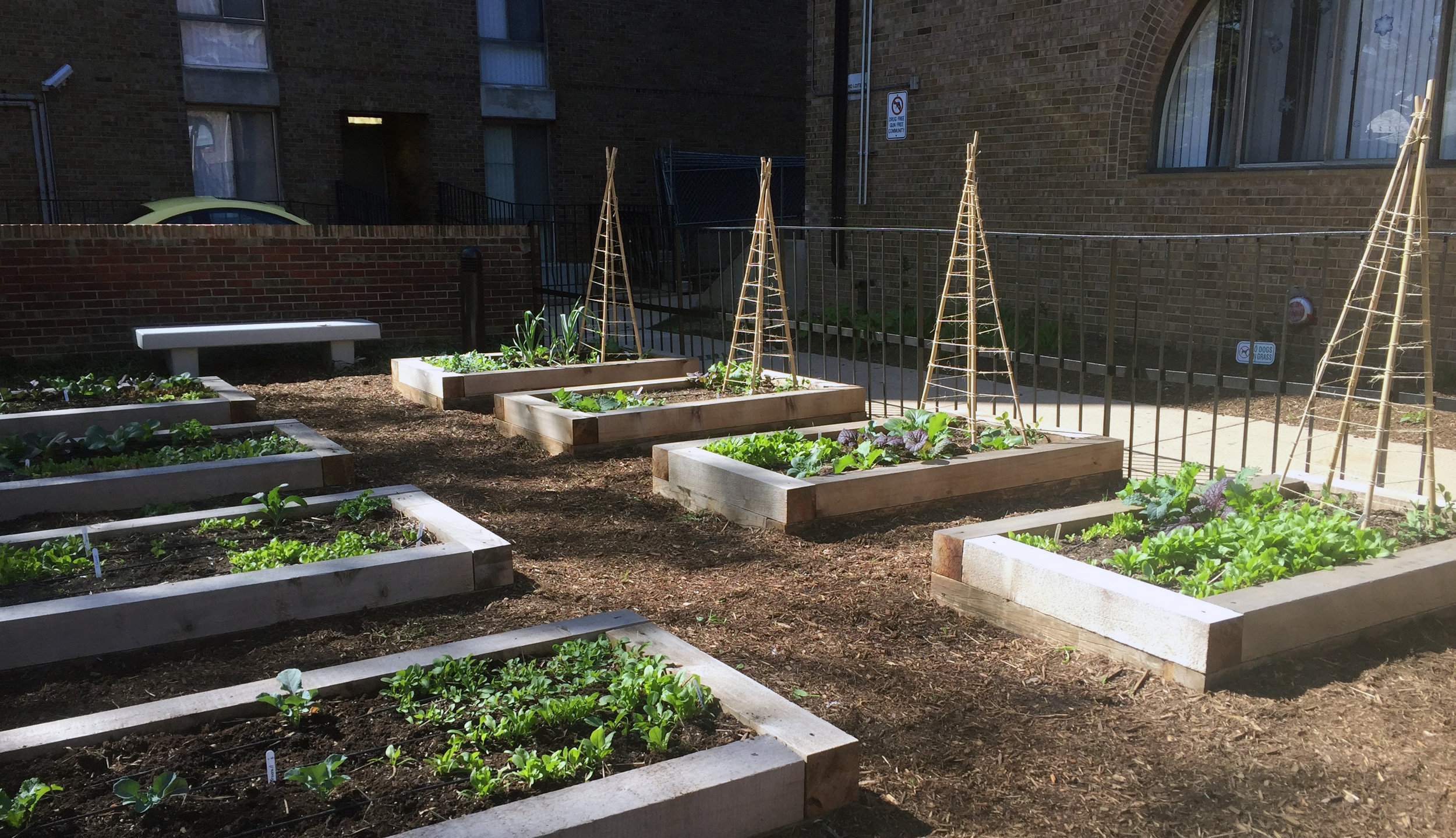 Community Gardens_Channel Square_2.jpg