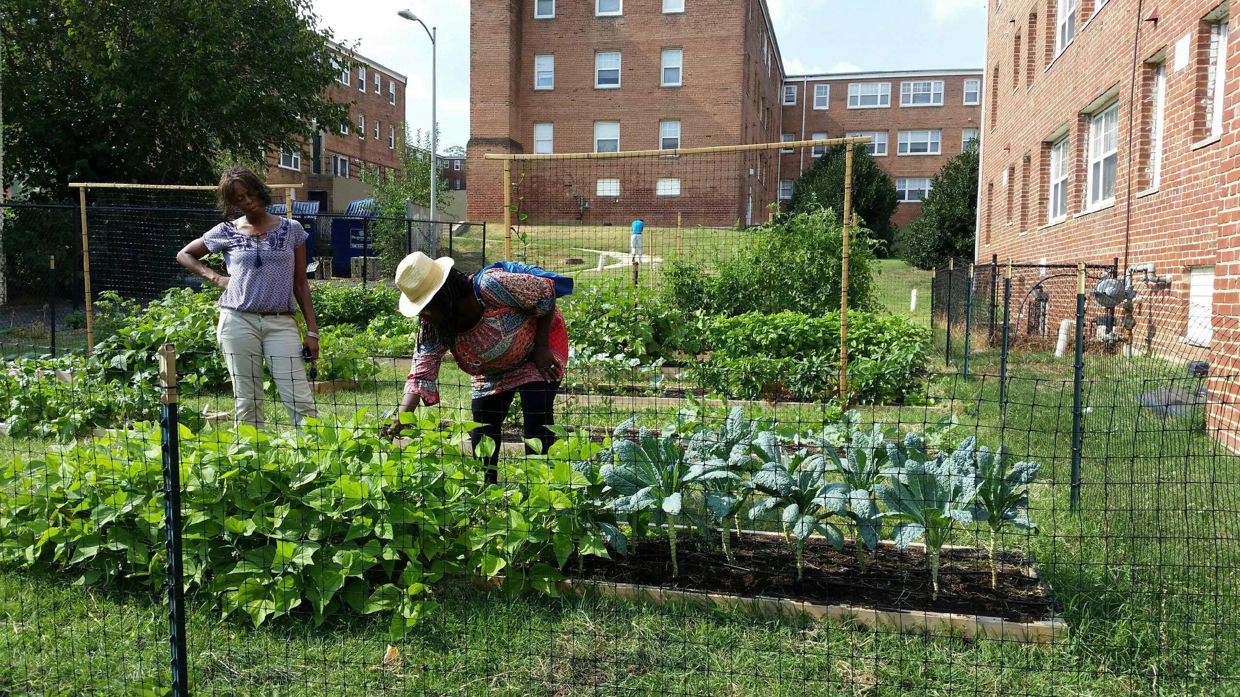 Community Garden_Edgewood.jpg