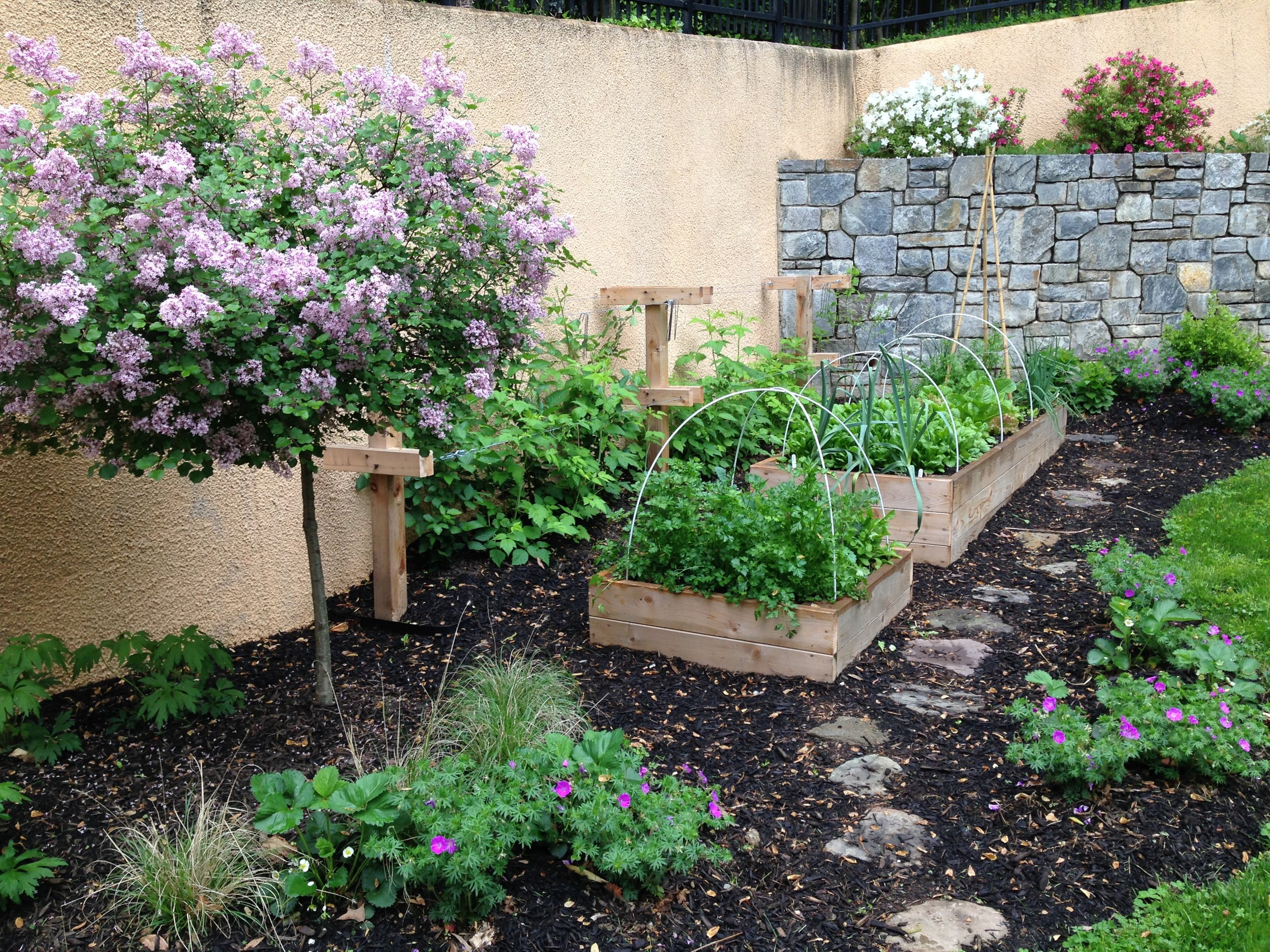 Raised Bed Garden, Blackberry Trellis, Stone Pathway, Mulching