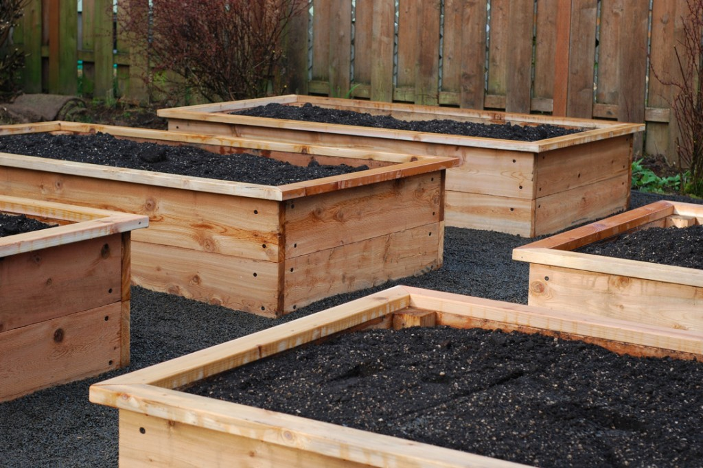 Raised Beds with Edging