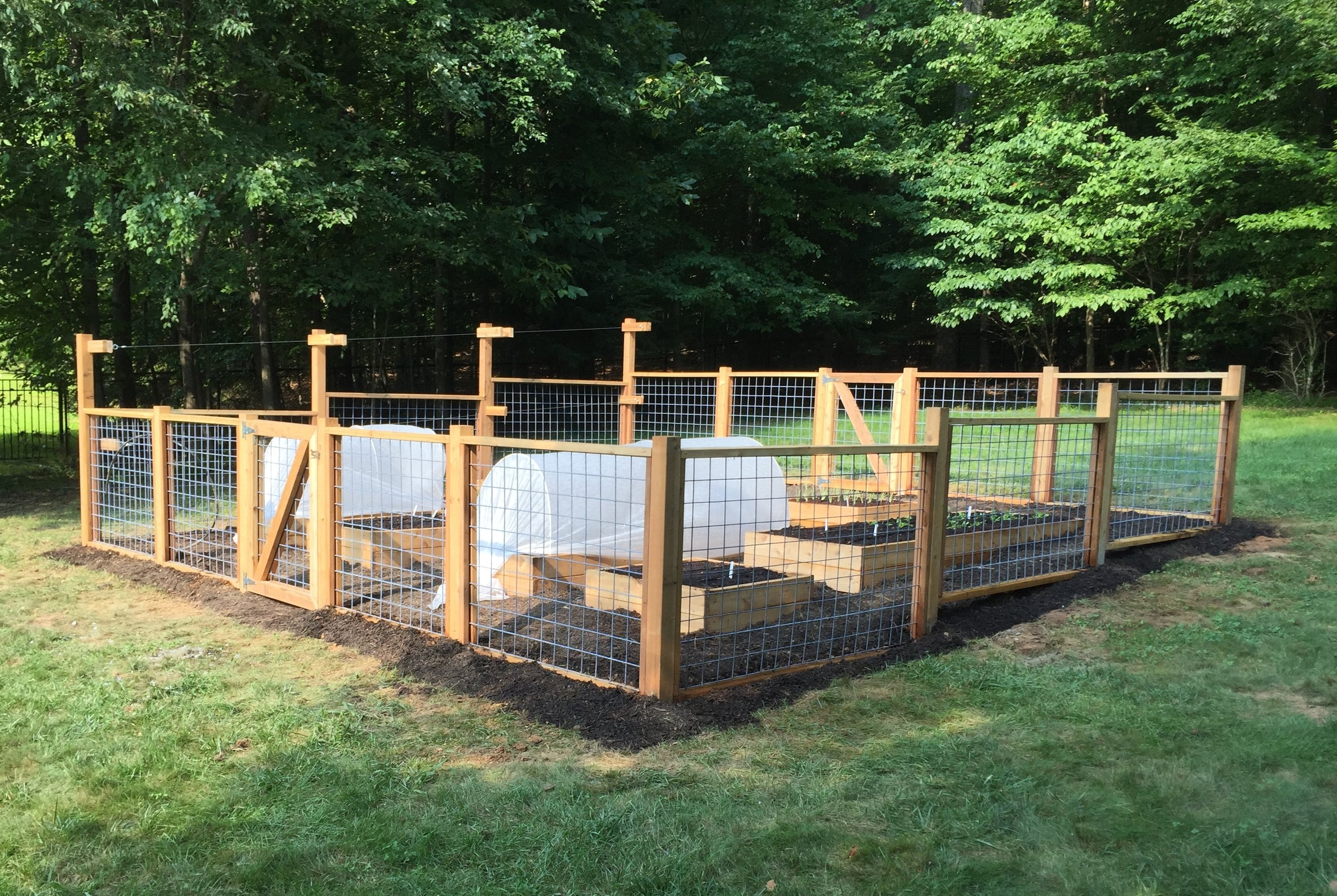 Hog Panel Fencing, Rasberry Trellis