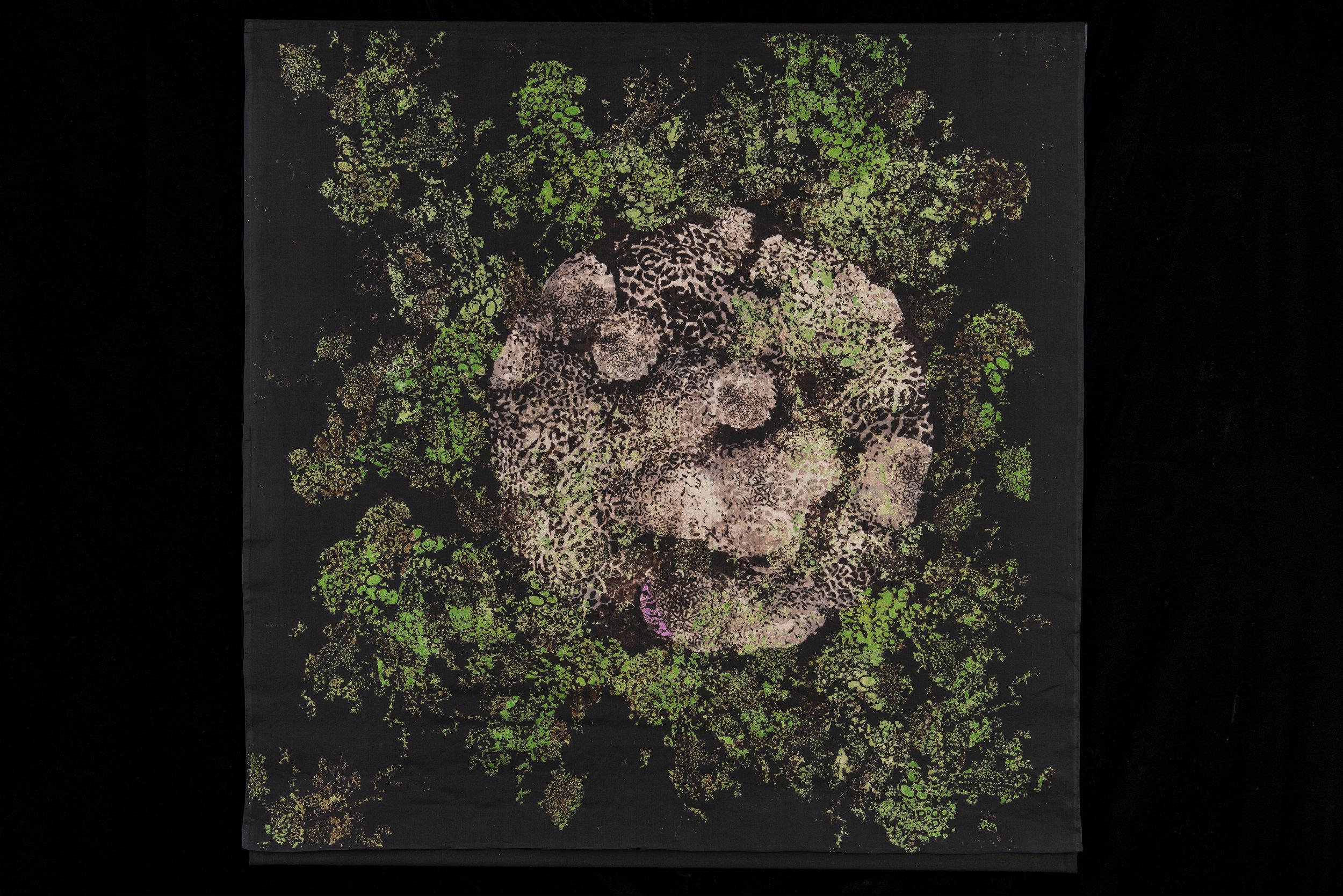 Forest Floor: Moss