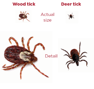 ticks1.png
