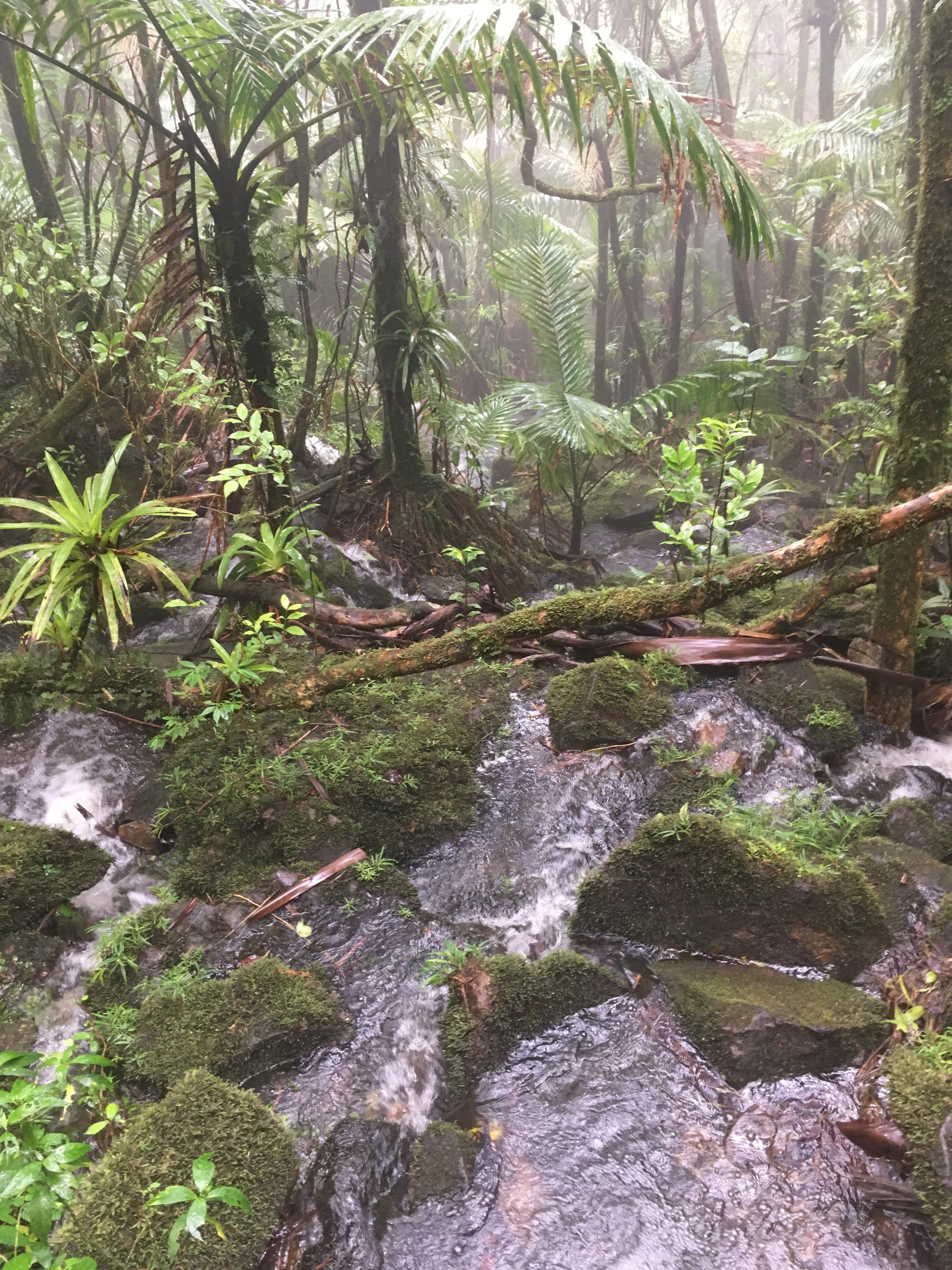 One of the many falling streams we passed through