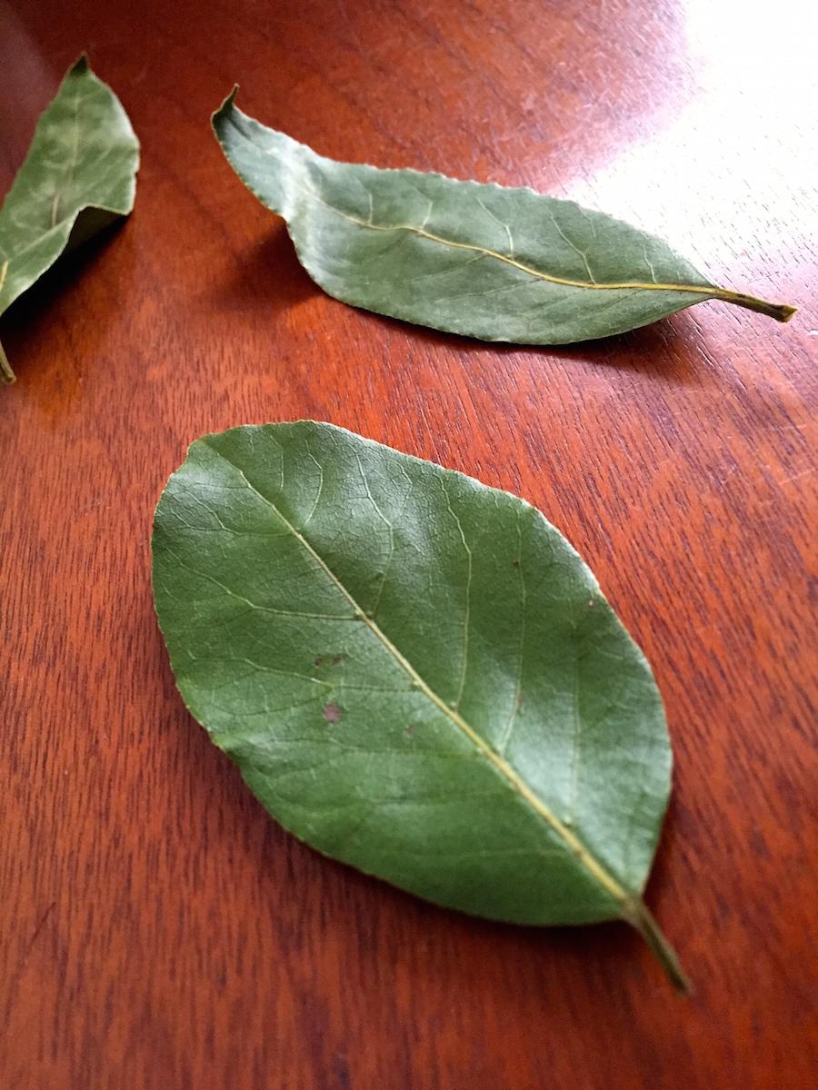 Folhas de louro, que simbolizam fartura no porta notas...