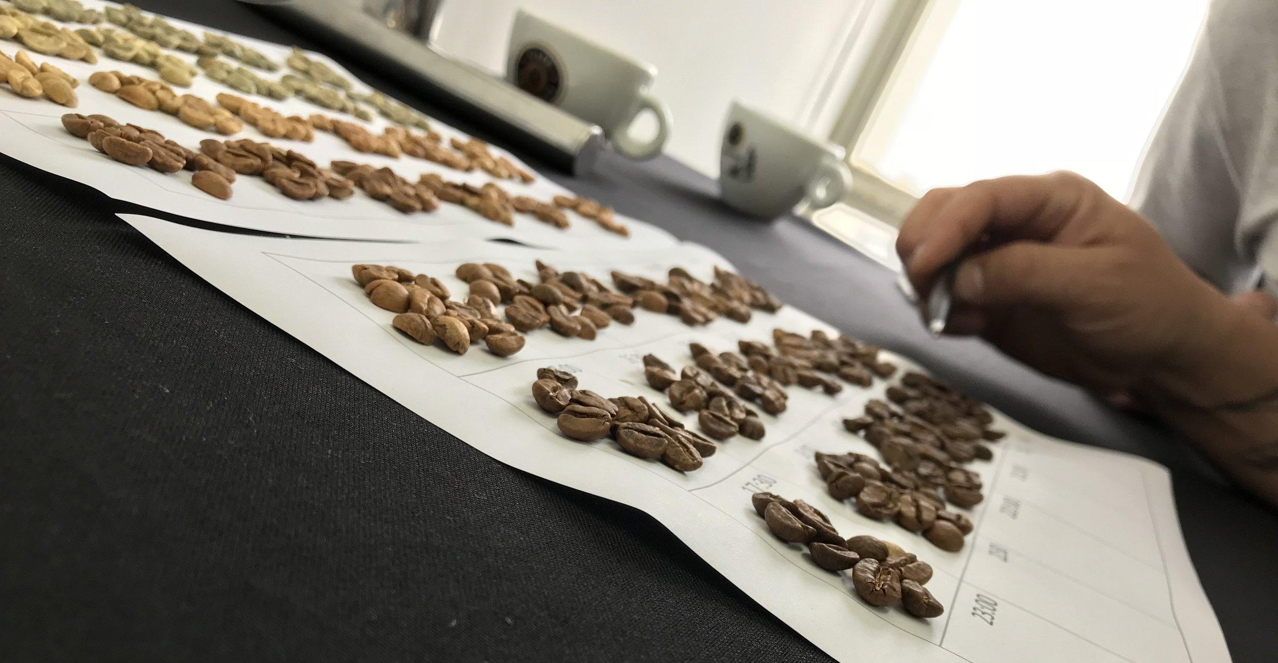 Gráfico vrLink sendo analisado durante exercício no curso Ciência da Torra do Café. Foto: Ensei Neto/Arquivo Pessoal.