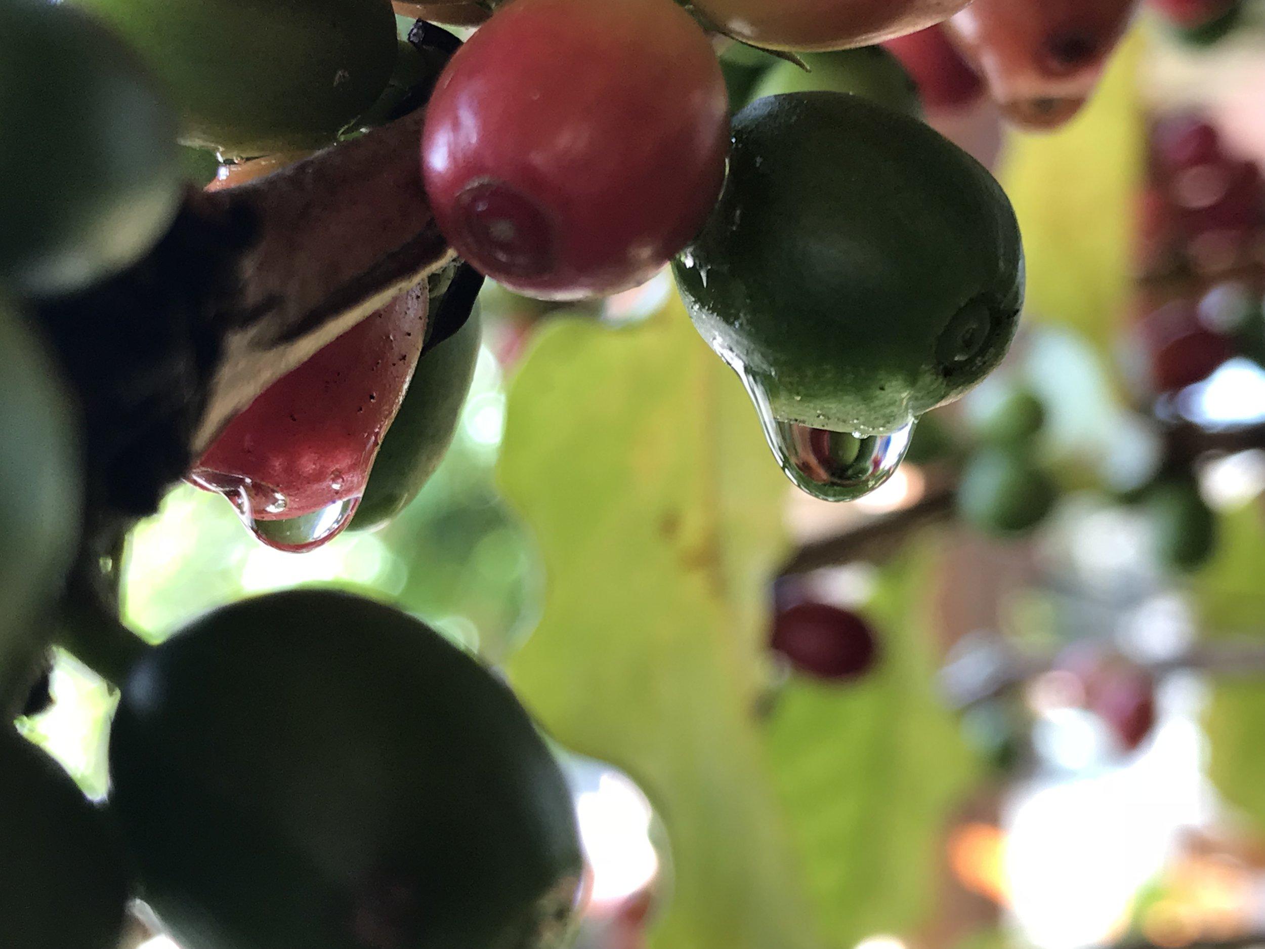 1811-Densidade_frutas.jpg