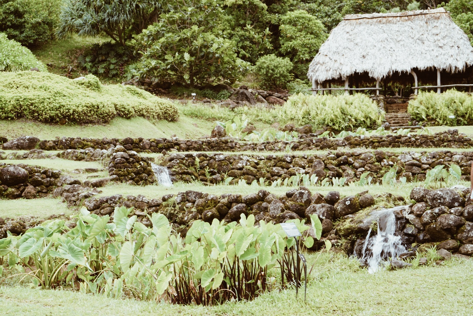 Limahuli Garden and Preserve