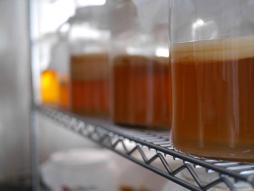 Jarr-Kombucha-brewing.jpg