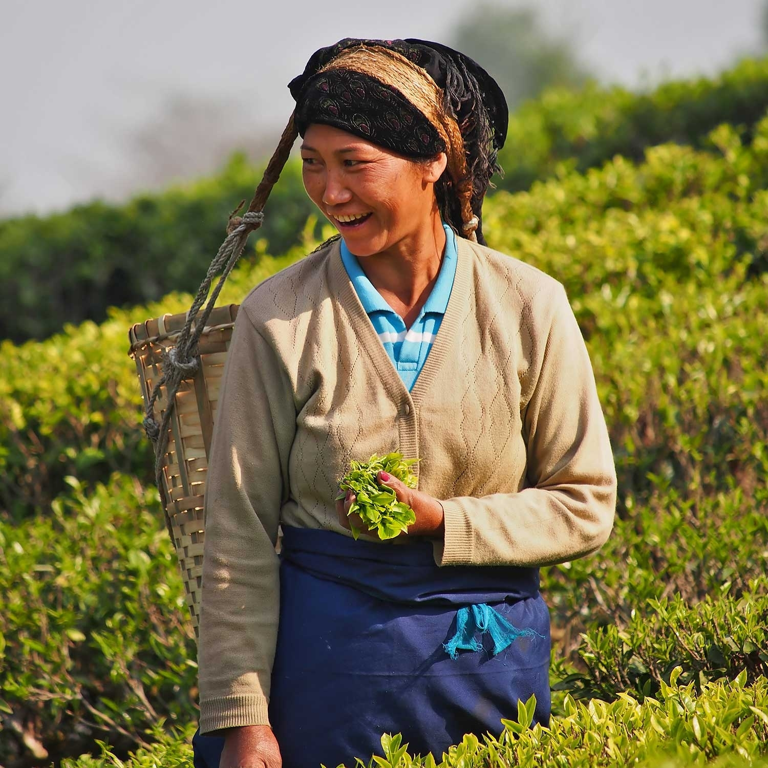 Darjeeling-Potrait-picking-web-ready.jpg