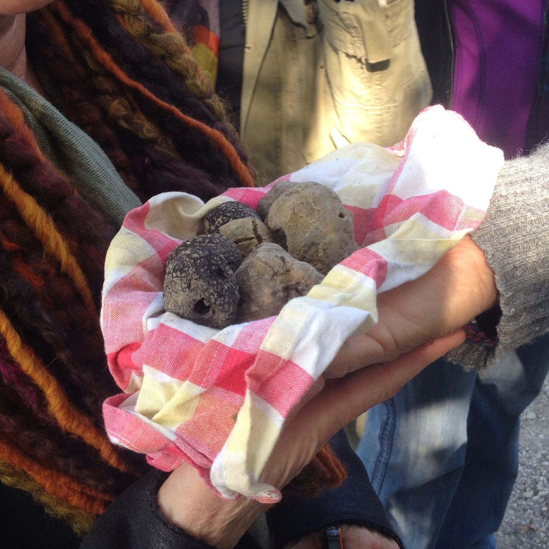 Truffle hunting in Alba, Morso Travel's food tour of Italy.